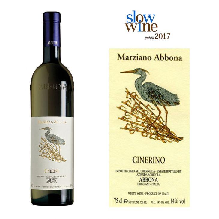 Cinerino (M. Abbona - Piemonte)